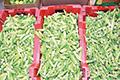 الأحساء.. منتجات زراعية تصل للمستهلك محملة بسموم المبيدات